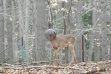 Deer with light fixture on head