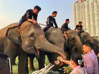 elephant polo abuse thailand
