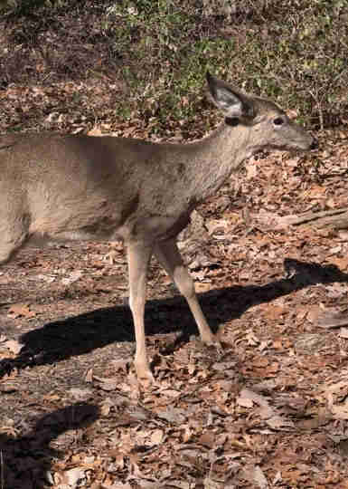rescued deer rejoins his herd