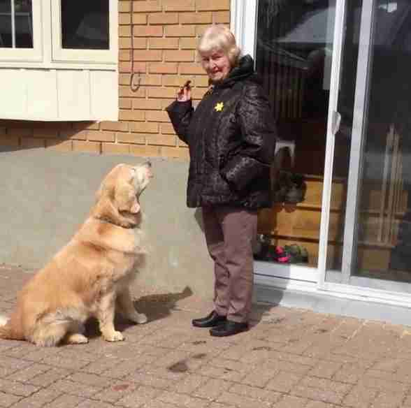 dog visits neighbor every day