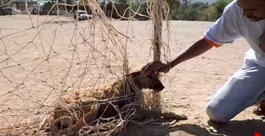 dog stuck in soccer net