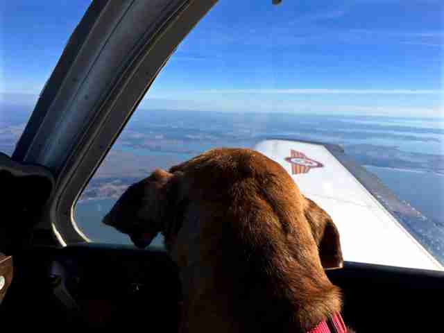 Old Dog looking out the window of plane