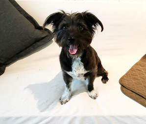 rescue dog smile chicago