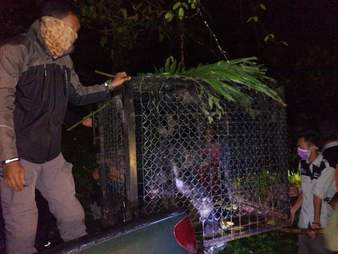 Rescuers relocating the macaques