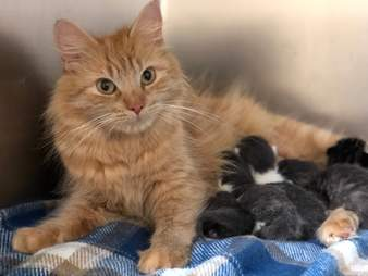 Stray cat helps raise friend's newborn kittens