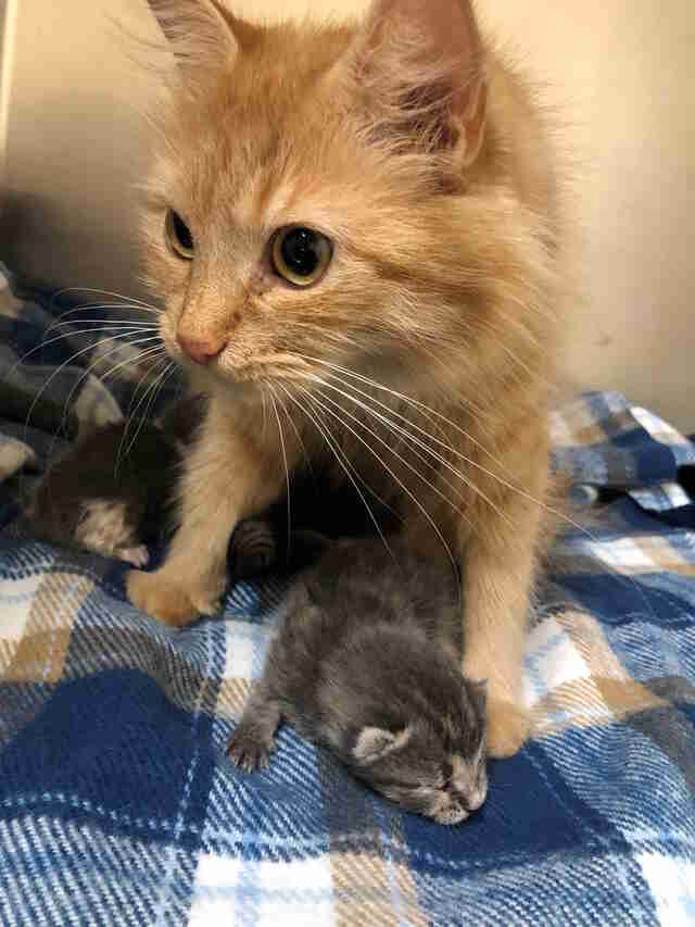 Stray cat helps raise friend's newborn kittens