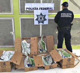 frog trafficking bullfrog mexico