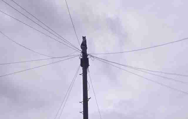 cat climbs a telephone pole