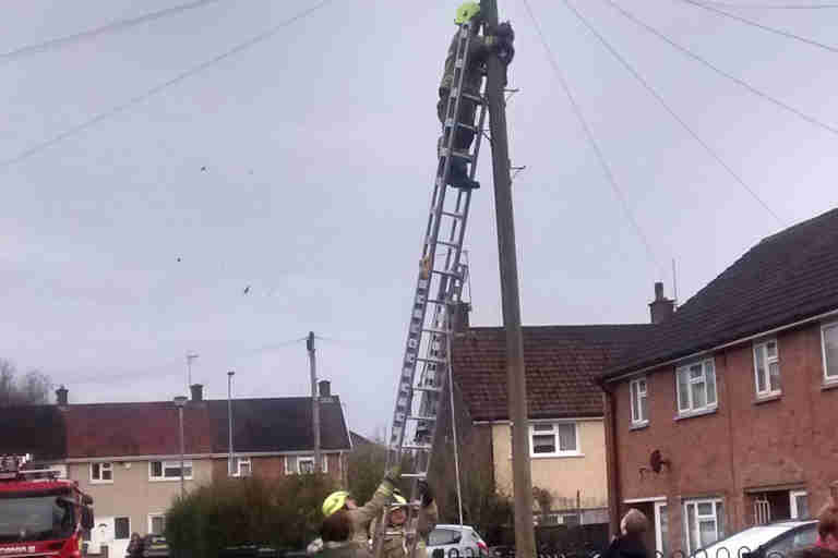 cat climbs telephone pole