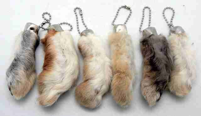 rabbit feet amazon cruelty