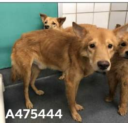 Dogs seized from hoarding case in San Antonio