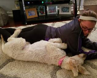 goldendoodle rescue north carolina