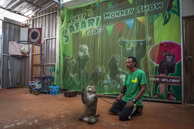 Macaque monkey performing at Thailand park