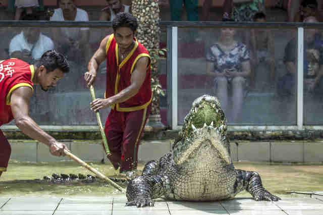 People stabbing crocodile at Thailand park