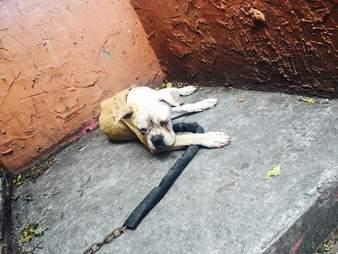 Dog abandoned on landing of house