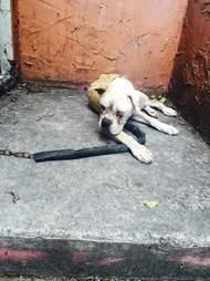 Abandoned dog chained up on landing
