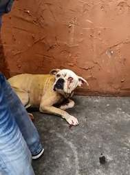 Dog abandoned on house landing