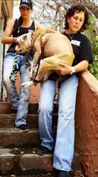 Rescuers carrying dog to safety