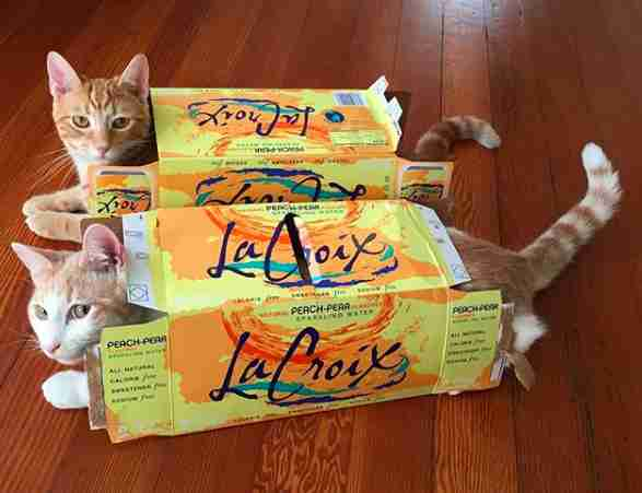 Rescue cat brothers in LaCroix boxes