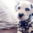 dog with a heart shaped nose