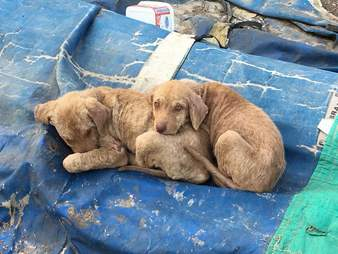 Puppies huddled together on median strip in Turkey