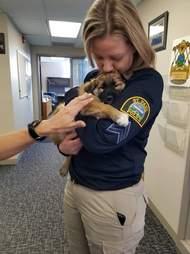 fuzz comfort dog police minnesota