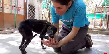 injured puppy cries for help