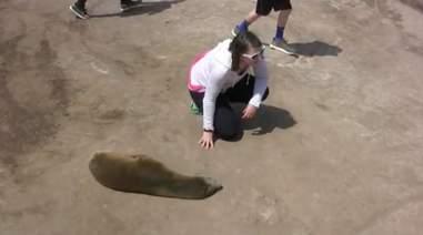 Young woman inching towards sleeping sea lion