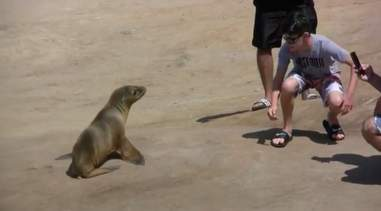 People sneaking up on a sea lion