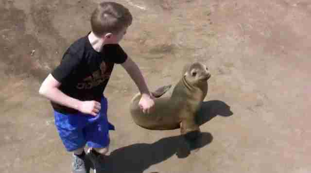A child pretending to box a sea lion