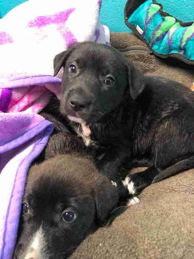 rescue puppies texas tires