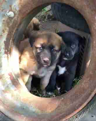 dog puppy rescue texas tire