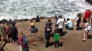 People crowding around a sea lion on a beach