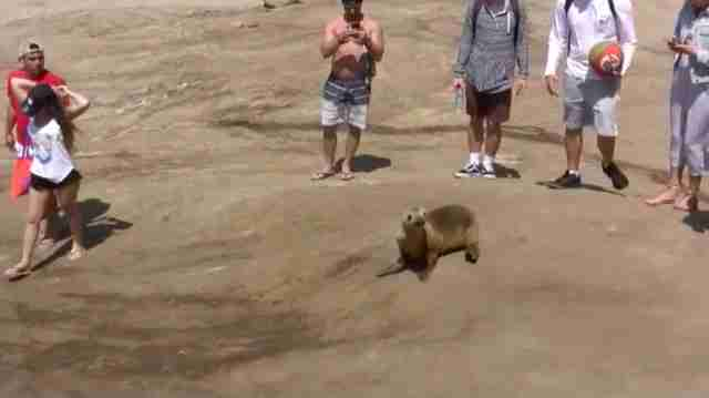 People crowding around baby sea lion