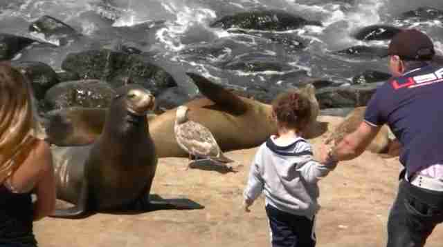 Man and little girl getting lose to a sea lion