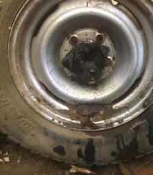 rescue puppy tire texas