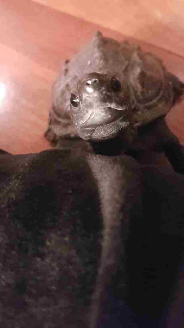 Turtle gazing up at person
