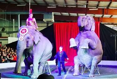 elephant circus cruelty garden brothers