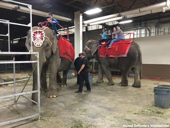 circus elephant cruelty pennsylvania