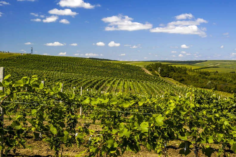 Cricova winery, Moldova
