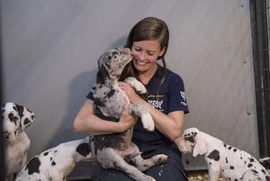 great dane puppy mill rescue new hampshire