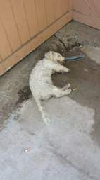 Dog who looks dead lying on the ground