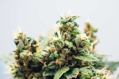 cannabis flowes