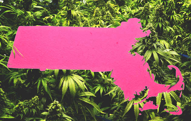 Everything You Need to Know About Legal Weed in Massachusetts