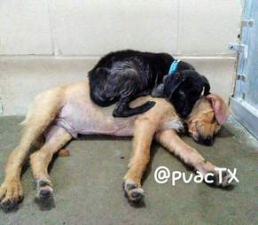 rescue puppies kill shelter texas