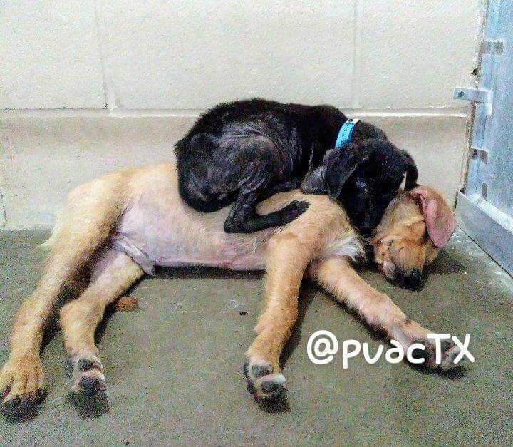 Puppies Who Just Met Had Nothing But Each Other For Comfort