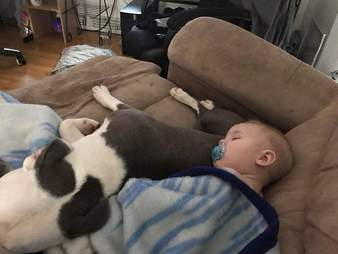 Rescue dog napping with toddler at her new home