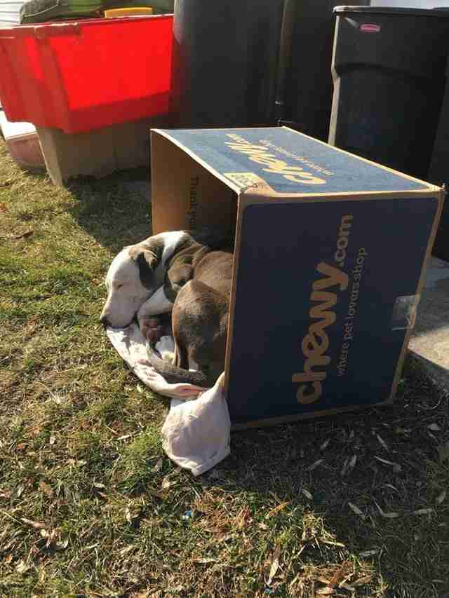 Abandoned dog curled up in Chewy.com box