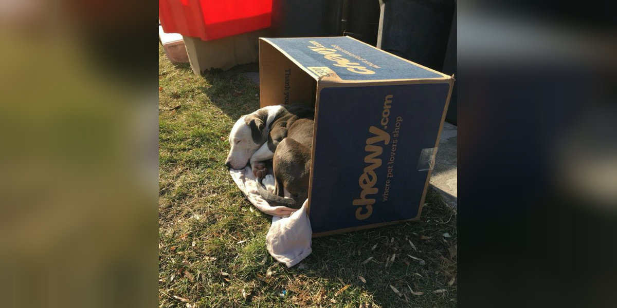 Abandoned Dog Was Trying To Keep Warm In A Cardboard Box