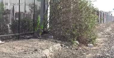 dog abandoned on train tracks